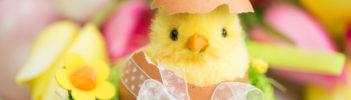 Ostern Küken