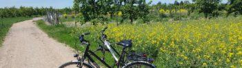 Landschaftsaufnahme Obstfeld Feldweg mit Fahrrad Mainz